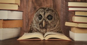 sova-knjige